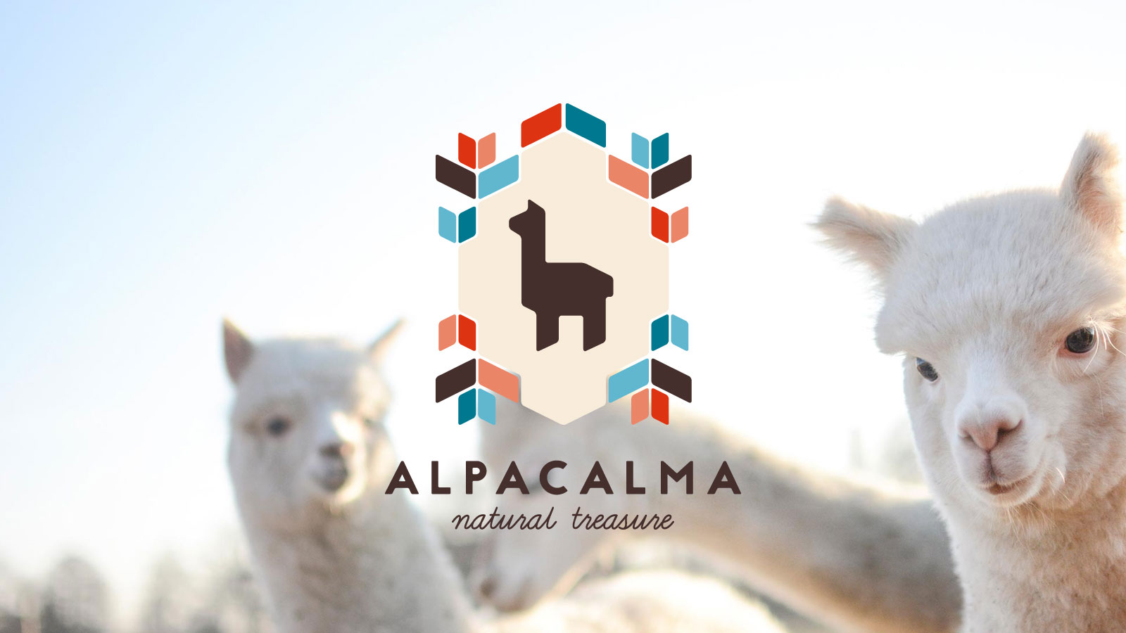 What affects the price of alpaca wool duvets?